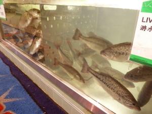 Live Fish Tanks, T&T - Food Gypsy