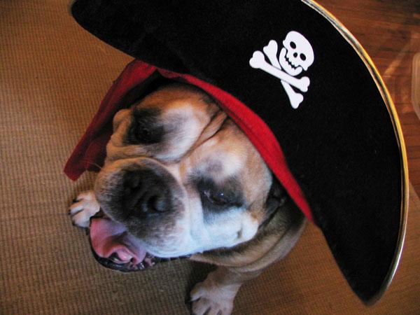 The Scurvy Dog - Food Gypsy