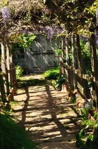 Tangled Garden, wisteria - Food Gypsy
